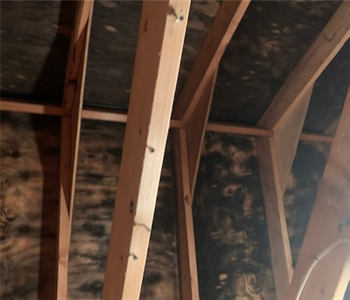 Mold on Wooden Beams in attic