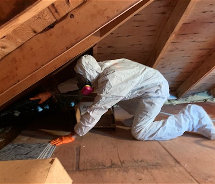SERVPRO technician in white PPE mitigating mold damage