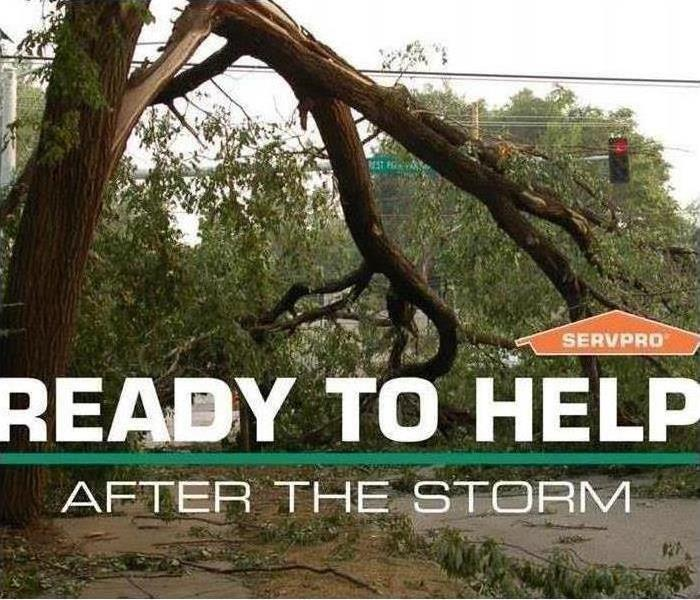 Fallen tree with text that says ready to help after the Storm with SERVPRO logo