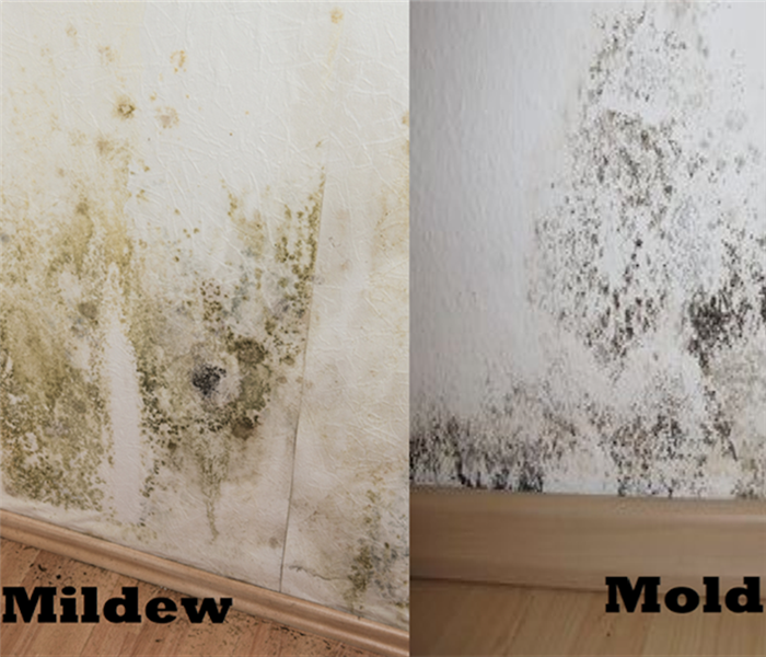 Mold Remediation Or Mildew