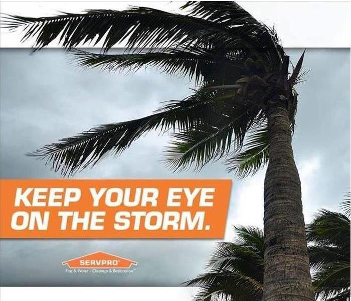 "A Palm Tree blowing in the wind. Text that reads ""Keep your eye on the storm."""