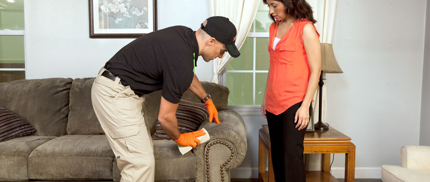 Kingston, PA carpet upholstery cleaning